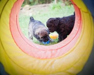 Duke und Daisy im Tunnel